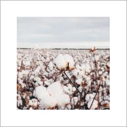 Organic Cotton Waste