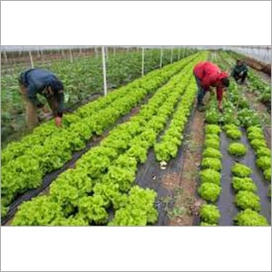 Agriculture Horticulture Consultancy