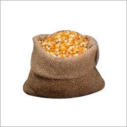 Maize Corn