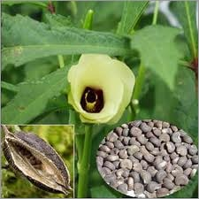 Aromatic  (Ambrette Seed ,Abelmoschus Moschatus)