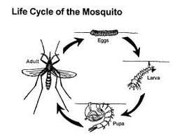 Mosquito Control Insecticide