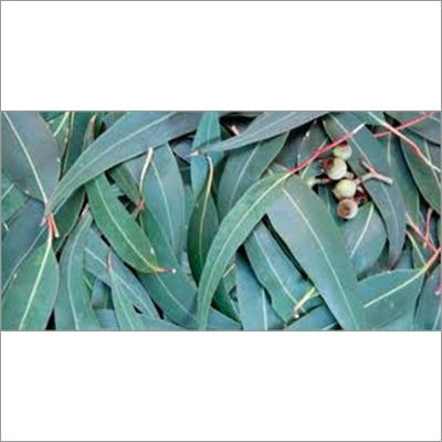 Eucalyptus Essential Oils