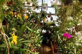 Plant Growth Enhancer
