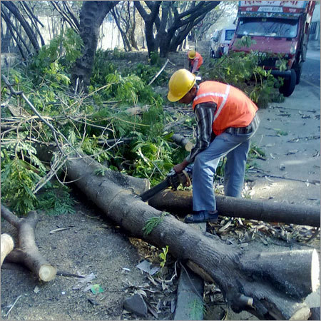 Tree Cutting Services In New Area Pune Jai Ganesh Wooden Packaging