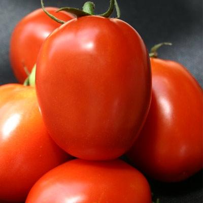 Hybrid Tomatoes