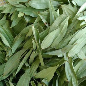 Dried Indian Bay Leaves