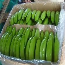 Green Color Cavendish Banana