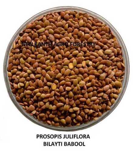 Prosopic Juliflora