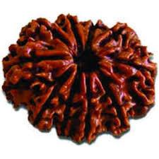 Brown Color Natural Rudraksha