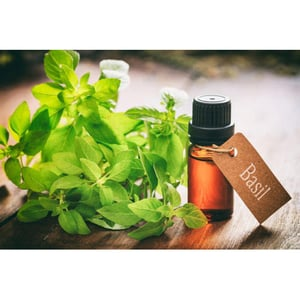 Great Smell Tulsi Oil