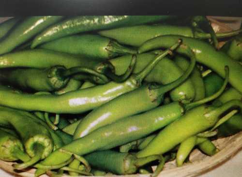 Fresh Natural Green Chilli