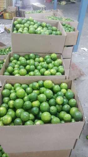 Juicy Fresh Green Lemons