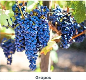 Delicious Taste Blue Grapes