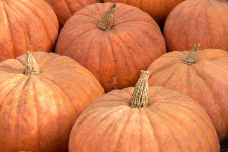 Natural Garden Fresh Pumpkin