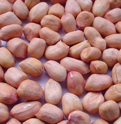 Dry Loose Groundnut Kernel