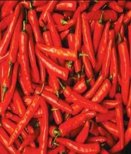 Fresh Red Chilli for Cooking