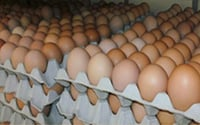 Pure and Fresh Eggs