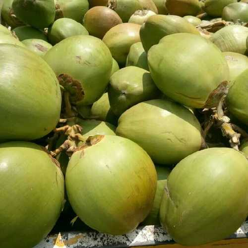 Organic Fresh Green Tender Coconuts