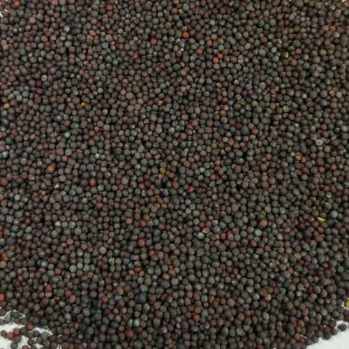 Common Natural Dried Black Mustard Seeds