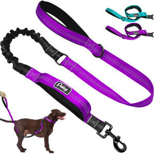 Dog Training Leads