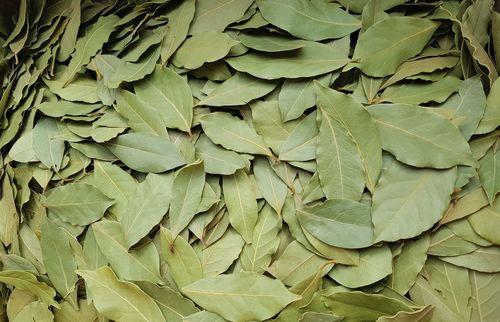 No Pesticide Bay Leaf