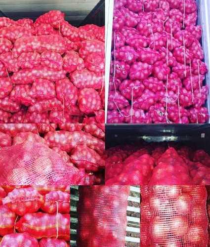 Fresh Red Big Onion