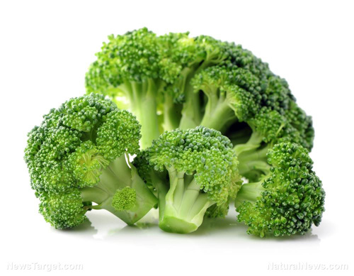 Broccoli Extract For Medicine