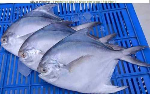 Export Quality Fresh Fish