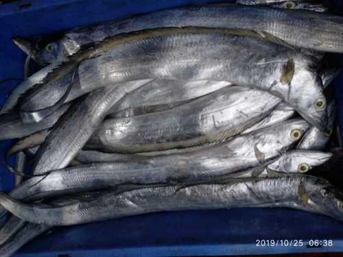 Fresh Fish For Restaurant