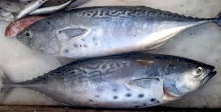 Frozen Bonito Fish Certifications: Iso2000