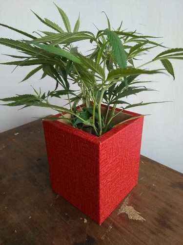 Red Wooden Flower Pot