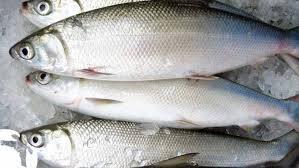 Frozen Rich Taste Milkfish Certifications: Iso2200