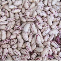 High Nutritional Speckled Kidney Beans