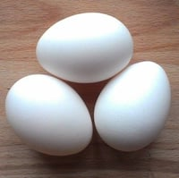 White Fresh Chicken Egg
