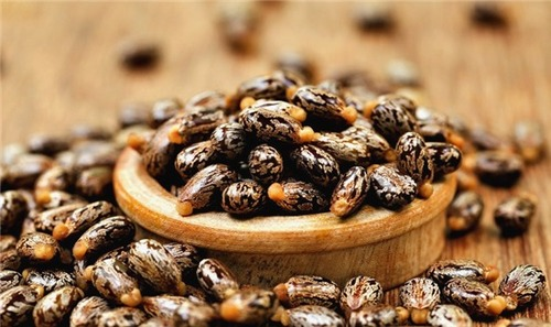 Premium Castor Seeds