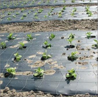 Biodegradable Mulch Film
