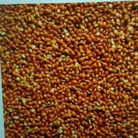 High Grade Red Millets