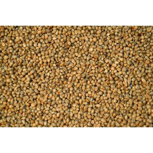 High Protein Pearl Millets