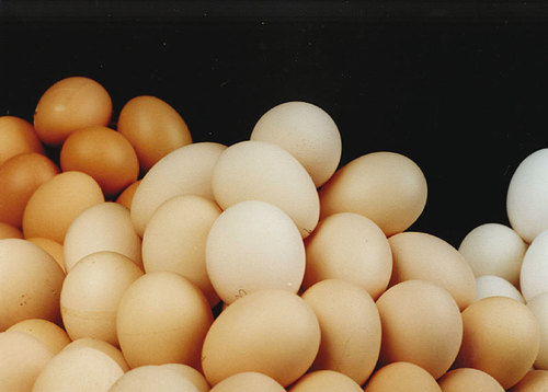 High In Protein Poultry Eggs