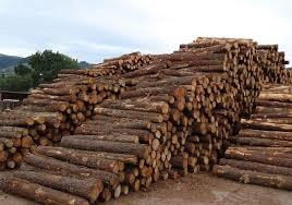 Round Shape Timber Logs