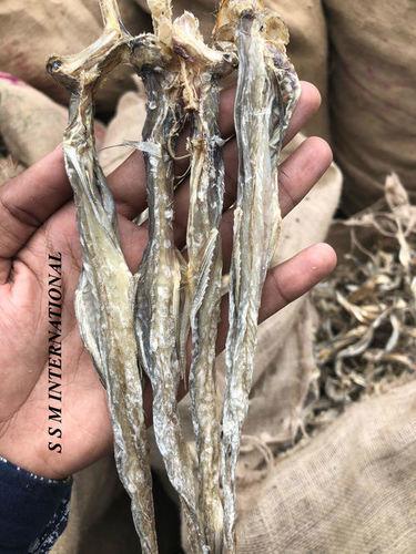Dry Bombay Duck (Bombil)