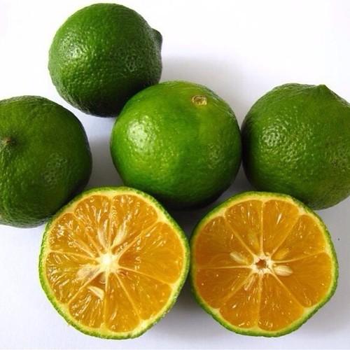 Fresh Lemon High Quality