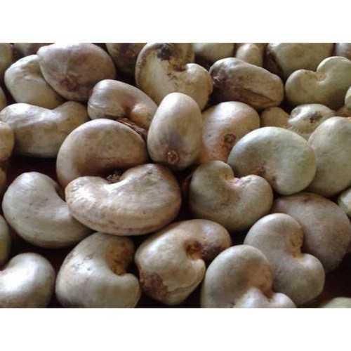Organic Fresh Cashew Nut