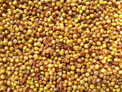 Dried Yellow Jowar Seeds