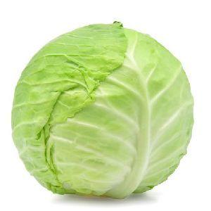 A Grade Fresh Cabbage