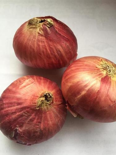 Big Size Red Onion