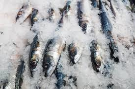 High Nutritional Frozen Fish