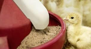 High Protein Poultry Feed