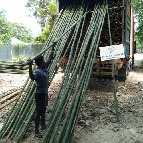 16 Feet Bamboo Pole