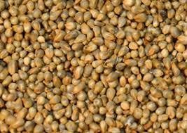 Cattle Feeds For High Nutrition